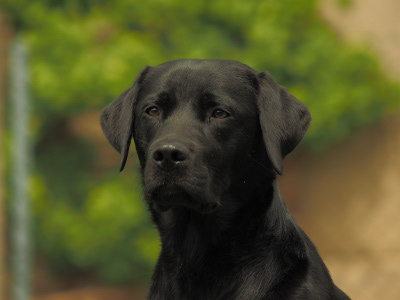 Rettungshund Bela