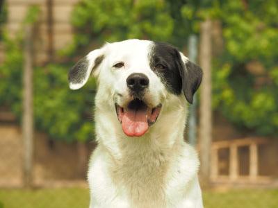 Rettungshund Ciccio